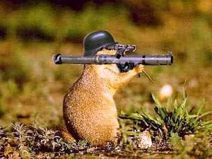 http://animalsatwar.webs.com/war_hamster.jpg